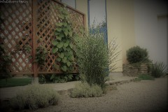 galerie-realizovane-zahrady-16