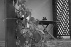 galerie-realizovane-zahrady-17