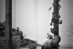 galerie-realizovane-zahrady-18