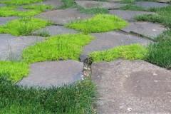 galerie-realizovane-zahrady-44