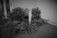 galerie-realizovane-zahrady-51